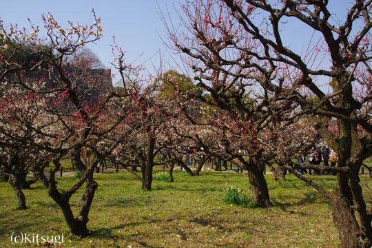 大阪城公園-梅林