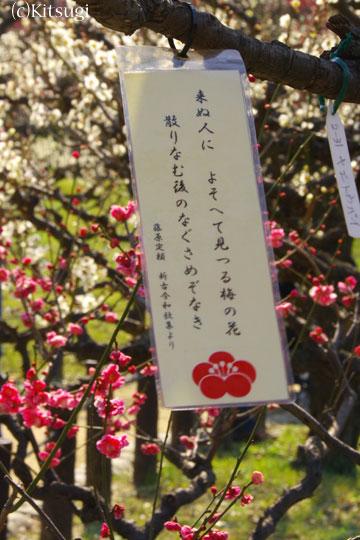 大阪城公園-梅林3